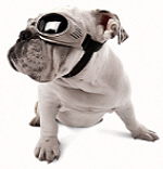 originalz-chromebulldog-150.jpg